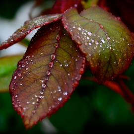 by Craig Luchin - Nature Up Close Leaves & Grasses