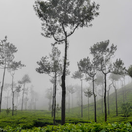 Tea Estate by Puneet Rane - Novices Only Landscapes ( #foggy #teaestate #chikmagalur #nature #landscape )