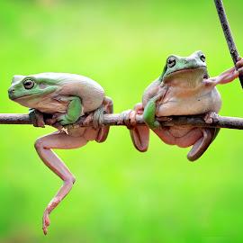 JELES by Sandi Nopri yanto - Animals Amphibians