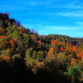 Fall in Leslie County Kentucky by Paul Mays - Landscapes Mountains & Hills ( fall, color, colorful, nature,  )