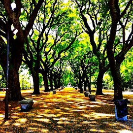 Buenos Aires by Tyrell Heaton - Instagram & Mobile iPhone ( iphone4, park, trees, buenos aires )