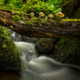 Fungis in the forest by Peter Samuelsson - Nature Up Close Mushrooms & Fungi