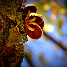 by Pam Satterfield Manning - Nature Up Close Mushrooms & Fungi ( fungi, nature, mushrooms and fungi, trees, nature up close, tree trunk, tree bark, toadstools, mushrooms,  )