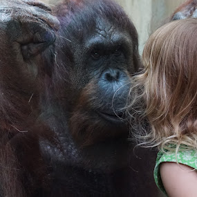 Face To Face With An Orangutan by VAM Photography - Babies & Children Children Candids ( child, girl, zoo, orangutan, washington dc, Africa, Safari,  )