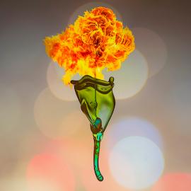 Torch by Ganjar Rahayu - Abstract Water Drops & Splashes ( abstract, highspeed, macro, waterdrop, digital )