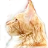 Maine Coon Wallpaper icon