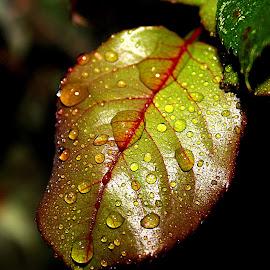 by Biljana Nikolic - Nature Up Close Leaves & Grasses ( fall, color, colorful, nature )