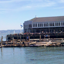 Pier 39  by Holly Herrmann - City,  Street & Park  Historic Districts ( san francisco )