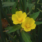 large-flower primrose-willow
