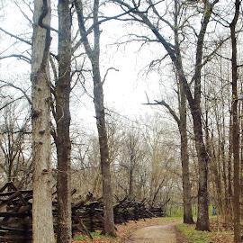 New Salem, Illinois, Early Spring by Tina Stevens - Landscapes Travel ( illinois, stump, rainy, logs, new salem, road, spring, log, united states, fence, path, trees, historical, walk, early, misty, nature, landscape )