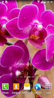 Screenshot of Orchids Wallpaper