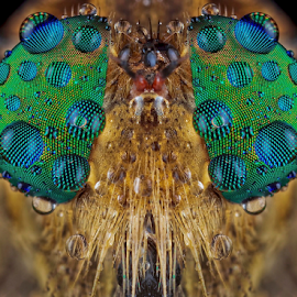 Blue Dews on My facet.... by Vincent Sinaga - Animals Insects & Spiders ( facet, dews, blue, insect, robberfly )