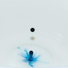 Milk & Food colouring by Sandra Pyke - Artistic Objects Other Objects ( food colouring, sanlee, splash, droplet, blue, drop, milk )