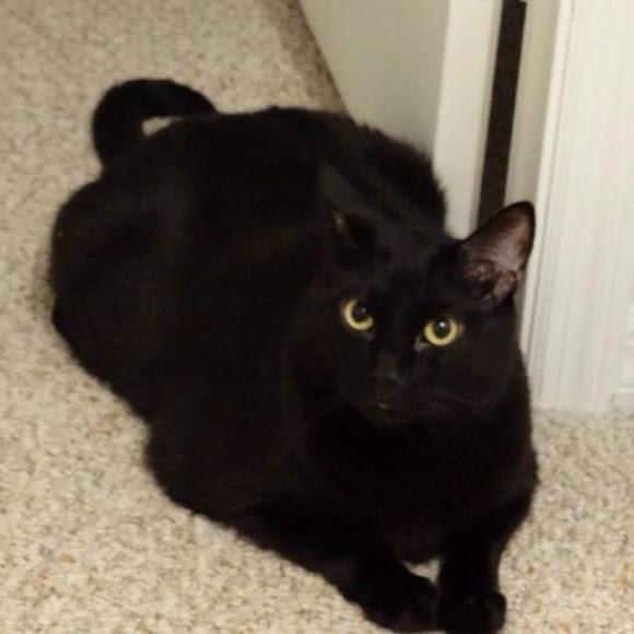 tabby cat temperament