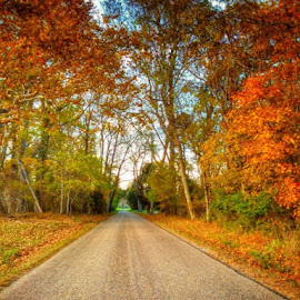 Yorktown Visit by W Vitug - Landscapes Travel ( countryside, fall colors, autumn, virginia, travel, road, landscape, fallen leaves, inspired )