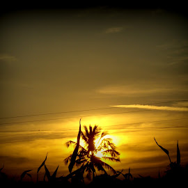 Sunset by Yashoda Patil - Nature Up Close Other Natural Objects