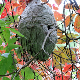 Bee/Wasp hive by Susanne Swayze - Nature Up Close Hives & Nests