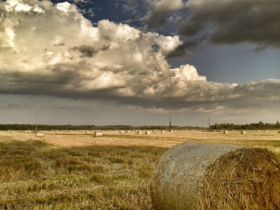 Field of Hay before the Storm by Nat Bolfan-Stosic - Uncategorized All Uncategorized ( clouds, field, hay, storm, rain )