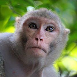 by Abhay Desai - Animals Other Mammals