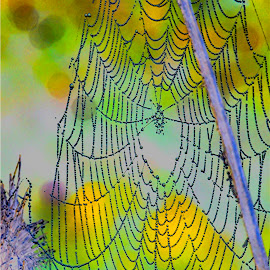Web Abstract in Blue by Reuss Griffiths - Nature Up Close Webs ( abstract, blue, dewdrops, web, yellow )