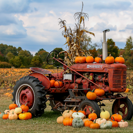 Autumn on the Farm by Nancy Merolle - Transportation Other ( farm, autumn, fall, pumpkins, transportation, tractor, stalks, corn )