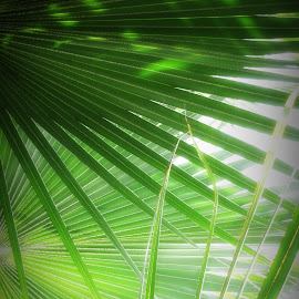 Shade of Green by Dawn Moder - Nature Up Close Other plants ( plant, green, light,  )