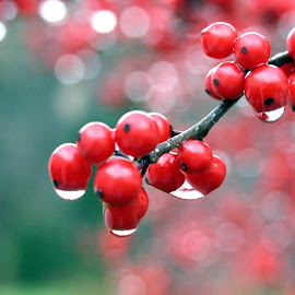 Berry Dew by Arian Nazarian - Food & Drink Fruits & Vegetables ( sweg, im so proooooo, wowowow, howhowhow did i do dat?, so are )