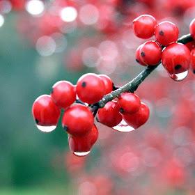 Red-Fruits-Wide.jpg