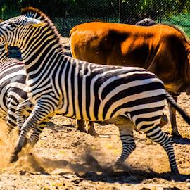 by Eseker RI - Animals Other Mammals (  )