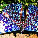 Cracker Butterfly / Borboleta Estaladeira