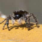 Grey Wall Jumper