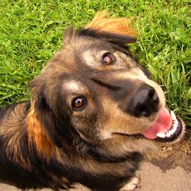 Minx by Linda Doerr - Animals - Dogs Portraits ( smiling dog, farm dog, playful, happy, dog,  )