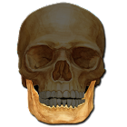 Anatomy Quiz icon