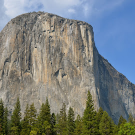 Majestic El Capitan, Yosemite  by Greg Koehlmoos - Novices Only Objects & Still Life ( mountain, yosemite, yosemite valley, majestic, el capitan, yosemite national park )