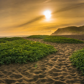 Rodeo Beach  by Brock Slinger - Landscapes Beaches