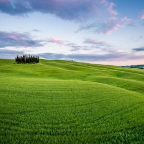Onda Verde by Francesco Riccardo Iacomino - Landscapes Prairies, Meadows & Fields ( orcia, hills, tuscany, val d'orcia, sunset, meadow, cypress, trees, san quirico, tuscan )