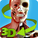Easy Anatomy 3D(learn anatomy)