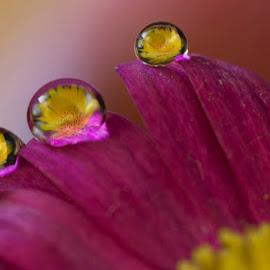 drop by drop by Dragana Trajkovic - Nature Up Close Natural Waterdrops (  )
