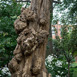 Tree at Washington Park, NYC by Bogard Anejo - Novices Only Flowers & Plants ( tree, nyc )