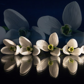 The souls of snowdrops by La Prairie - Artistic Objects Still Life