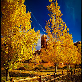 Utah Fall by Fred Coleman - Nature Up Close Trees & Bushes ( fence, utah, fall, trees, navajo twins, travel, gold, twin rocks, landscape, bluff,  )