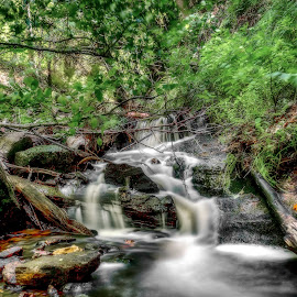 Stream 2 by Calvin Morgan - Landscapes Forests ( stream, nature, creek, landscape, nikon d7000 )
