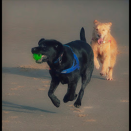 Catch Me by CLINT HUDSON - Animals - Dogs Playing