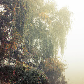 untitled by Zsolt Zsigmond - Nature Up Close Trees & Bushes ( water, lean, tree, autumn, fog, mist )