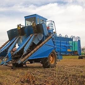 Sugar Cane Harvester by Ron Olivier - Transportation Other ( sugar cane harvester )
