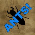 ANTS! icon