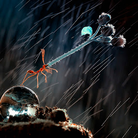rain by Firmansyah Goma - Animals Insects & Spiders ( semut, makro, rain )
