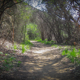 La Jolla Canyon trail by Eric Ebling - Landscapes Forests ( park, nature, california, outdoors, state, mugu )