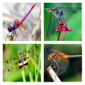 Dragon Fly Live Wallpaper icon