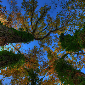 family of trees by Tipa Marius - Landscapes Forests (  )